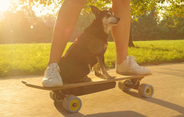 best electric skateboards guide thumbnail